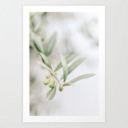 Rustic Olive Branch. Minimalistic print - fine art photography Art Print