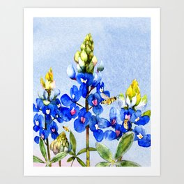 Bluebonnets 3 Art Print