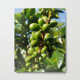 Costa Rican Coffee Metal Print