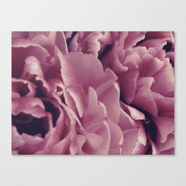 Purple Peonies Canvas Print