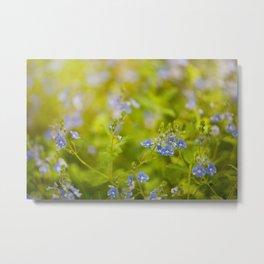 Beautiful blue speedwell flowerets Metal Print