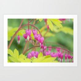 Bleeding Heart Flower Art Print