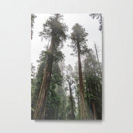 Like The Redwoods - 5/365 Metal Print