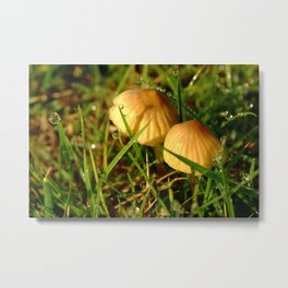 Two Toadstools Metal Print