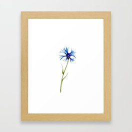 Simple Cornflower Framed Art Print