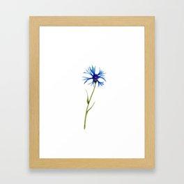 Simple Cornflower Framed Art Print