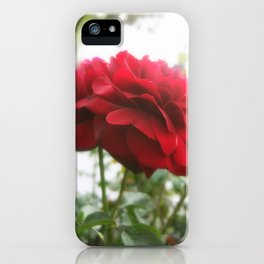 Red Rose with Light 1 iPhone Case