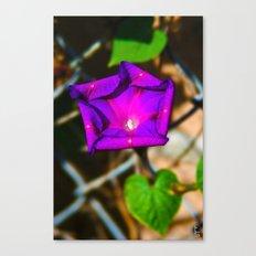 Purple Blossom On A Vine Canvas Print