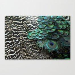 Peacock Bird Feathers Plumage Texture 1 Canvas Print