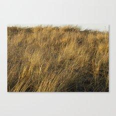 Montauk Grass Sand Dunes Canvas Print
