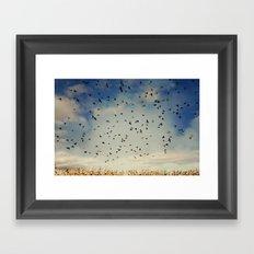 Harvest birds Framed Art Print