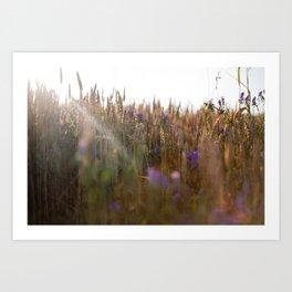 Wheat Dreams Art Print