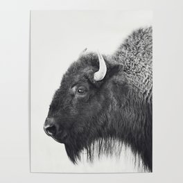 Buffalo Photograph in Black and White Poster
