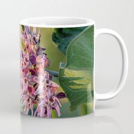 Showy Milkweed Coffee Mug