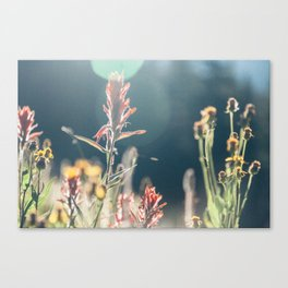 FALL FIELDS | 02 Canvas Print