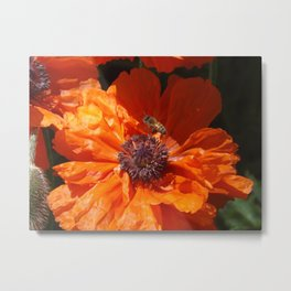 A Bee And A Poppy  Metal Print