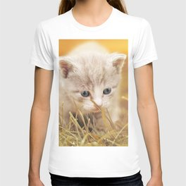 Kitten | Chaton T-shirt