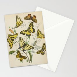 BUTTERFLIES LEPIDOPTERA Scarce Eastern Tiger Swallowtail Stationery Cards