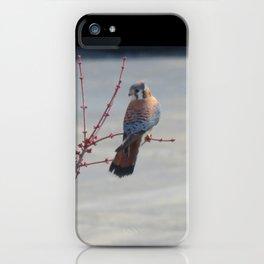Coy Sparrowhawk (Kestrel) 6 iPhone Case