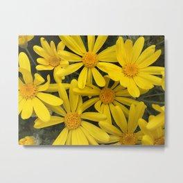 Botanical series - yellow daisies up close and personal Metal Print