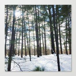 Winter Woods1 Canvas Print