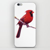 cardinal iPhone & iPod Skins featuring Cardinal by Ginger Opal