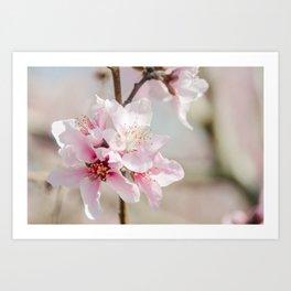 Peach Blossoms 9 Art Print