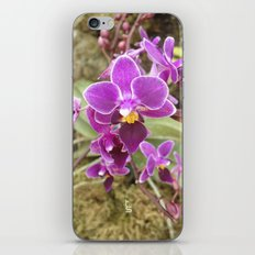 Orchid I iPhone & iPod Skin