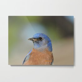 Bluebird in La Verne Metal Print