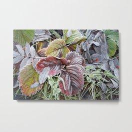 Frosty Leaves Metal Print