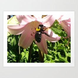 flower and bee and pollen my house san jose Art Print