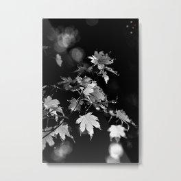 Leaf & Light Metal Print