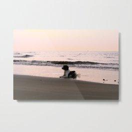 Surfs up. Metal Print