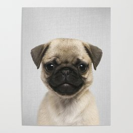 Pug Puppy - Colorful Poster