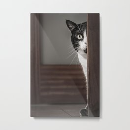 Peaking Cat Metal Print