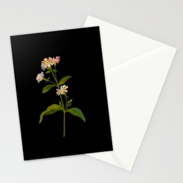 Saponaria Officinalis Mary Delany British Botanical Floral Art Paper Flowers Black Background Stationery Cards