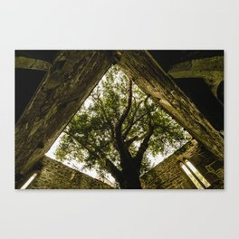 Under the Yew Canvas Print
