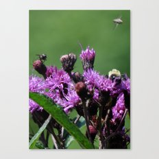 Violet Flowers Bee Photo Photograph 1  Canvas Print