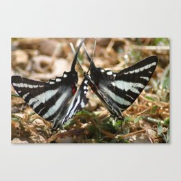 2 by 2 Canvas Print