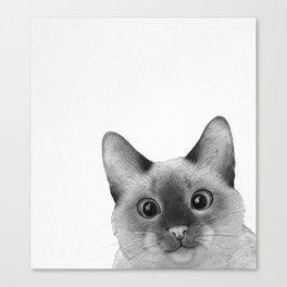 Siamese sneak-a-peek Canvas Print