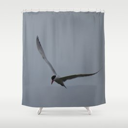 Tern flying at the Jensen Nature Preserve Shower Curtain