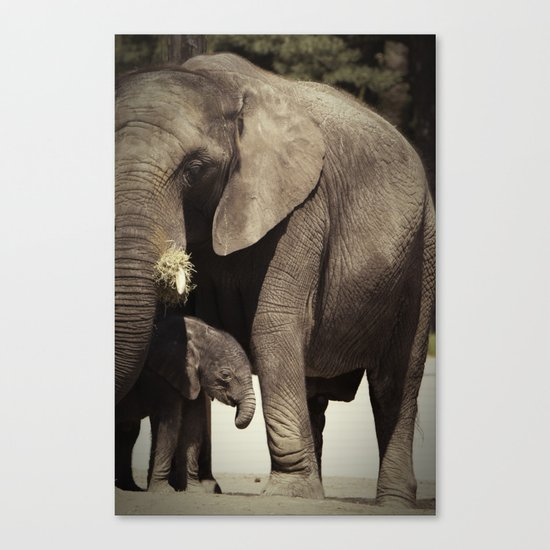 Elephants, mother and child Canvas Print