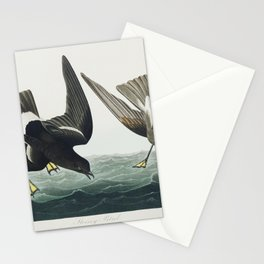 Stormy Petrel from Birds of America (1827) by John James Audubon etched by William Home Lizars Stationery Cards