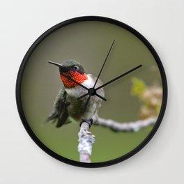 Hummingbird XII Wall Clock