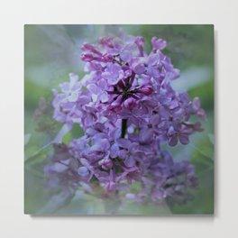 Lady Lilac Metal Print