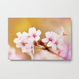 Blooming fairy cherry tree flowers Metal Print