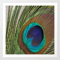 peacock feather Art Prints featuring Peacock Feather by aquenne