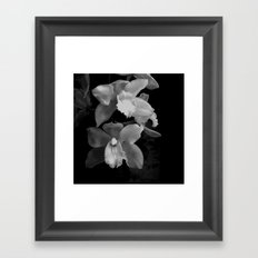 Midnight Gold - BW Framed Art Print