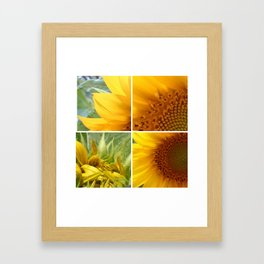 sunflower2 Framed Art Print