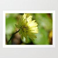 Lovely Yellow Daisy Art Print